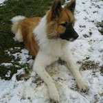 Nala-Dominga in ihrem ersten Schnee