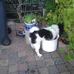 Danilo hilft im Garten