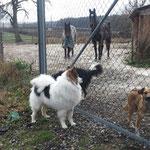 Cailin macht Besuch bei Pferden