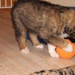Carinjo entdeckt den Futterball!