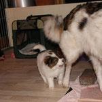 bleib stehen Mama, sonst beiß ich dich!