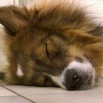 müde Cailin