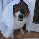 Cailin als Braut verkleidet
