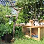 Hundehütte und Katzenbaum durften natürlich mit umziehen
