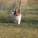 Cailin, die schnelle Maus, ist wieder schwer geflitzt