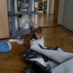 Nala versteckt ihr Möhrchen