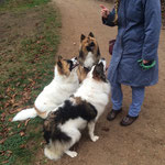 Dasko, Culito und Bobik haben sich zum Jungs Spaziergang getroffen
