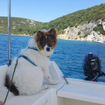 die Boot-Elo-Maus