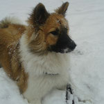Nala-Dominga hat nun auch Schnee
