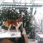 Barani staunt über den Schnee unter dem Terassen-Dach