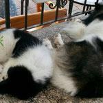 Danilo beim Mittagsschlaf