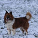 Anton genießt den Schnee