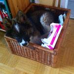 Cashira ist hier einfach eingeschlafen!
