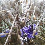 Blumen die im Dezember vom Frost überrascht werden