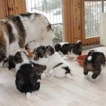 alle wollen Mama einfangen und Milch genießen