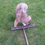 Carinjo-Bobik hilft ;-) beim Kehren