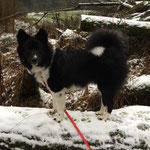 Delisha genießt den Schnee