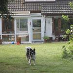 unser Garten, das Paradies der Hunde, Katzen und Welpen