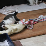 der Kampf mit dem Handtuch