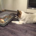 Dasko schaut Fernsehn