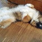 Schönheitsschlaf von Bobik