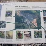 Schautafel: Tiere im Steinbruch