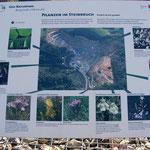Schautafel: Pflanzen im Steinbruch