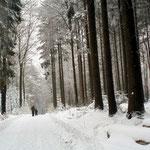 """""""Weinweg"""" im Winter"""