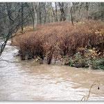 mittleres Hochwasser - Gleithang
