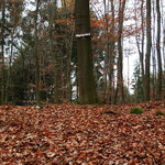 Hügelgrab 3; von Grab 2 Waldweg nach Westen gehen, ca. 100m