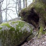 Baum-Stein-Symbiose