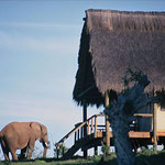 gorah-elefant-camp