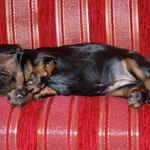 Noch ganz Mini..auf der Couch