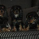 von links nach rechts...Mama Paguera, Andratx und Charly