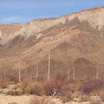 Boojums auf Baja: diese speziellen Bäume wachsen nur an zwei Orten auf der Welt, unter anderem auf Baja