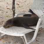 Auf Galapagos muss man sich seine Strandliege erkämpfen