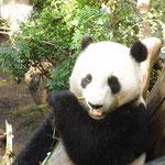 Gemütliches Schmatzen: im San Diego Zoo