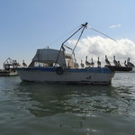 Pelikanspalier nur für uns, an der Hafeneinfahrt in Livingstone