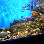 Aquarium haut en couleurs