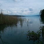 Hallwiler See