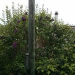 Unser Garten von Oben