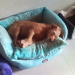 Celine mal müde:-))