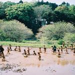 田んぼで遊ぶ年長児