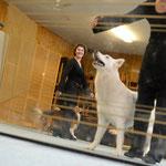 """Hunde in der Stadt"" (C)2014 Dirk Ostermeier, all rights reserved."