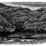 川と森 木版調