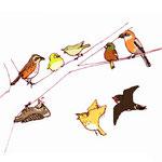 ・モズ秋には毎度高鳴きを聞かせてくれます・カワラヒワジュイーーンって声がそれはもう目立つ・ウグイス以前紹介した子(たぶん)、めちゃくちゃ鳴き名人鳥になりました・メジロ柿がなるとヒヨドリ等に負けじと頑張って食べに来ます・ツグミ散歩していると案外すぐそばに佇んでいたりして・コゲラ向かいの家のアンテナをつついていたことも!・ヒバリかなりとおーくに飛んでいるのが見える程度;・ツバメ子が大きくなると、電線の上にきて給餌を見せてくれます