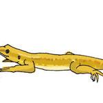 カナヘビひなたぼっこ 2012.07.22