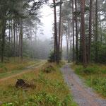 Fahrradweg zum Weststrand