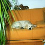 mein eigenes Sofa ...