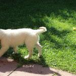 Vesper entdeckt eine Nacktschnecke im Garten ...